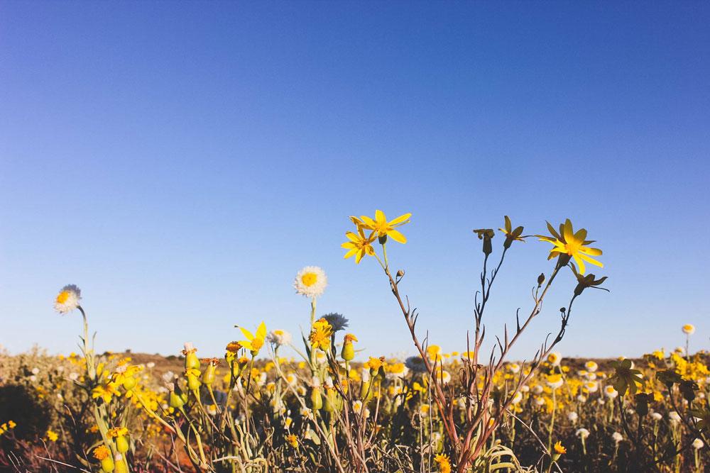 Scenery Flowers